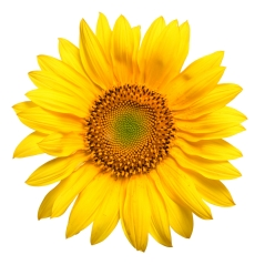 SunflowerAbout