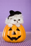 HalloweenKitty