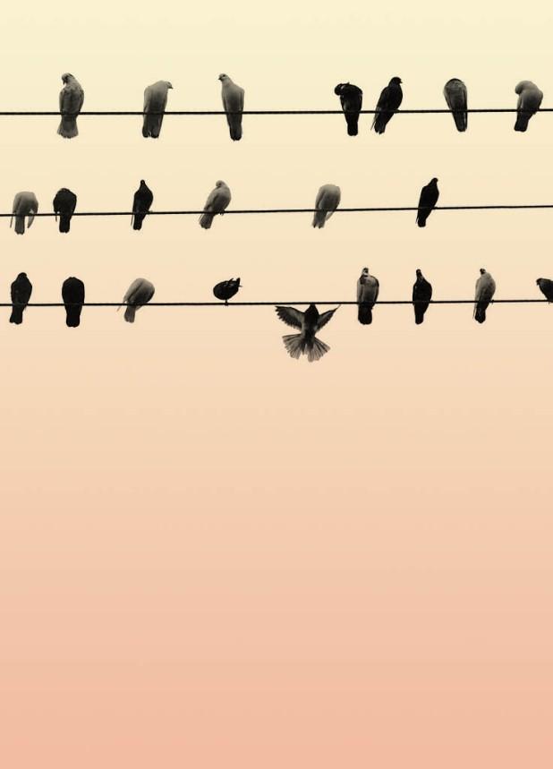 BirdsOnTelephoneLine