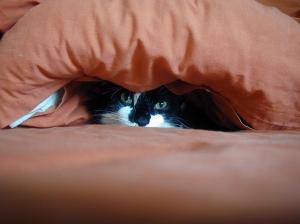 CatDuvet